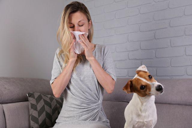 Alergia na sierść, a zwierzak w domu – czy to możliwe?