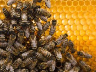 Na co stosować pyłek pszczeli?
